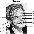 Pruso-veidas